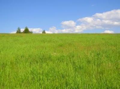 Biomasa jako źródło energii odnawialnej